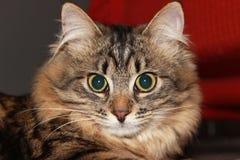 Gato pensativo Imagen de archivo libre de regalías