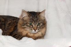 Gato pensativo Foto de archivo libre de regalías