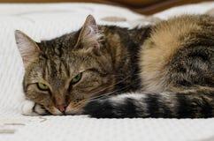 Gato pensativo con los ojos verdes Imagenes de archivo