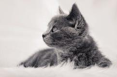 Gato pequeno Imagem de Stock Royalty Free