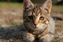 Gato pequeno Foto de Stock Royalty Free