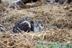 Gato pequeno branco e cinzento Fotografia de Stock