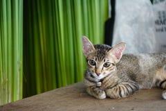 Gato pequeno colocado na prancha de madeira fotografia de stock