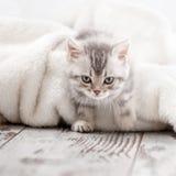 Gato pequeno em casa fotografia de stock royalty free