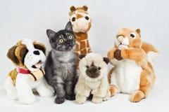 Gato pequeno engraçado entre brinquedos Cuddly Imagem de Stock