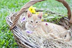 Gato pequeno na cesta de vime imagens de stock