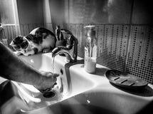 Gato pequeno que senta-se no dissipador e que olha seu proprietário lavar suas mãos Fotos de Stock Royalty Free