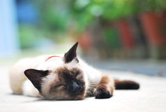 Gato perdido Foto de archivo