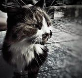 Gato perdido imagenes de archivo