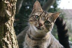 Gato perdido Fotografía de archivo libre de regalías