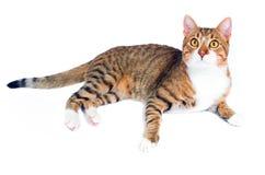 Gato perdido adoptado Fotografía de archivo