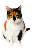 Gato perdido adoptado Foto de archivo