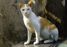 Gato perdido curioso imagen de archivo libre de regalías