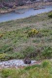 Gato perdido de Brown en un prado al lado de un r?o rodeado por las floraciones y la hierba fotografía de archivo libre de regalías