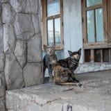 Gato perdido en casa del abandono Fotos de archivo