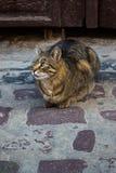 Gato perdido en la calle Imagen de archivo libre de regalías