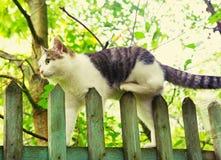 Gato perdido en la cerca Foto de archivo