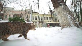 Gato perdido exloring la ciudad vieja de Odessa en el invierno metrajes