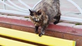 Gato perdido hambriento sucio en la calle almacen de metraje de vídeo