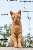 Gato perdido hermoso Foto de archivo