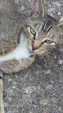 Gato perdido hermoso Imágenes de archivo libres de regalías