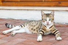 Gato perdido hermoso Fotografía de archivo
