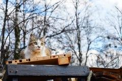 Gato perdido manchado mullido que se sienta en una pila de ruina y de tablones Imagen de archivo