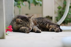 Gato perdido perezoso Imagen de archivo