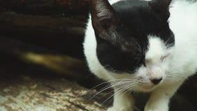 Gato perdido que busca a la izquierda sobre la comida lanzada en el patio trasero almacen de video