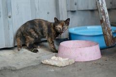 Gato perdido que come la comida Imágenes de archivo libres de regalías