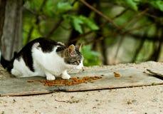 Gato perdido que come la comida Fotos de archivo