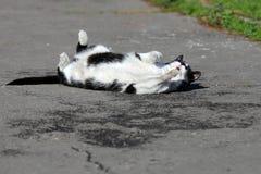 Gato perdido que juega en la calle Fotos de archivo libres de regalías