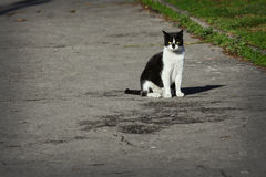 Gato perdido que se sienta en la calle Foto de archivo