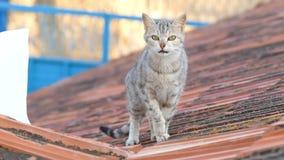 Gato perdido que vaga en el tejado de la casa almacen de metraje de vídeo