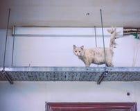 Gato perdido sucio débil en lavadero en el top imagen de archivo