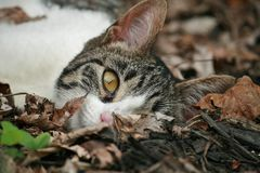 Gato perezoso Imágenes de archivo libres de regalías