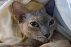 Gato perezoso Imagenes de archivo