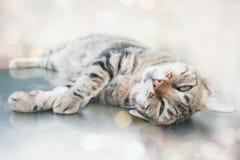 Gato perezoso fotos de archivo libres de regalías