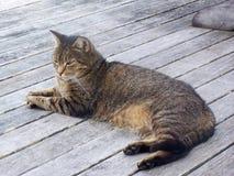 Gato perezoso en el piso Foto de archivo