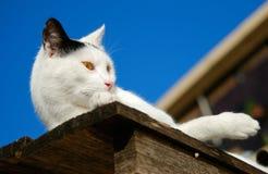 Gato perezoso encima de la vertiente vieja Imagenes de archivo