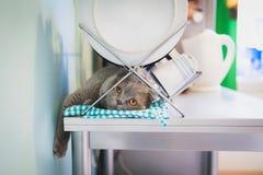 Gato perezoso que miente debajo del palero de plato Imagenes de archivo