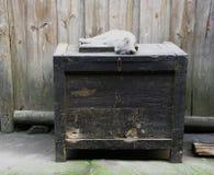 Gato perezoso y ratón astuto y gabinete roído Foto de archivo