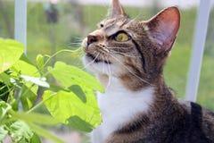 Gato pernicioso em um indicador ensolarado. Fotografia de Stock Royalty Free