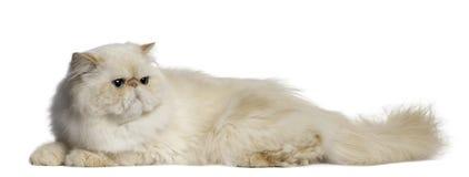 Gato persa, 2 anos velho, encontrando-se Imagens de Stock