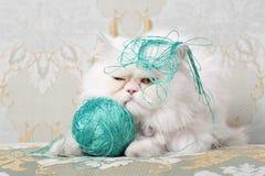Gato persa blanco que consigue molestado por las lanas imagenes de archivo