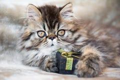 Gato persa bonito do gatinho com caixa de presente ou presente fotografia de stock
