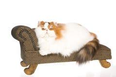 Gato persa del calicó en el sofá marrón Fotos de archivo