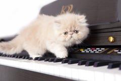 Gato persa en un piano Imágenes de archivo libres de regalías