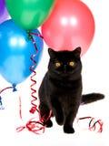Gato persa exótico con los globos del partido Fotografía de archivo libre de regalías