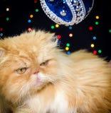 Gato persa hermoso en la decoración de la Navidad Imagen de archivo